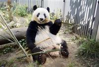 シャンシャン、来年12月まで貸与延長 都と中国合意