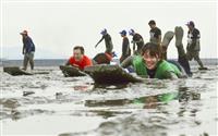 有明海の干潟で泥まみれ競う 国際色豊かガタリンピック 佐賀