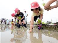 東日本大震災耐えた「奇跡の復興米」大阪で田植え