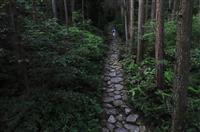 熊野に続く石畳・馬越峠 世界遺産15周年