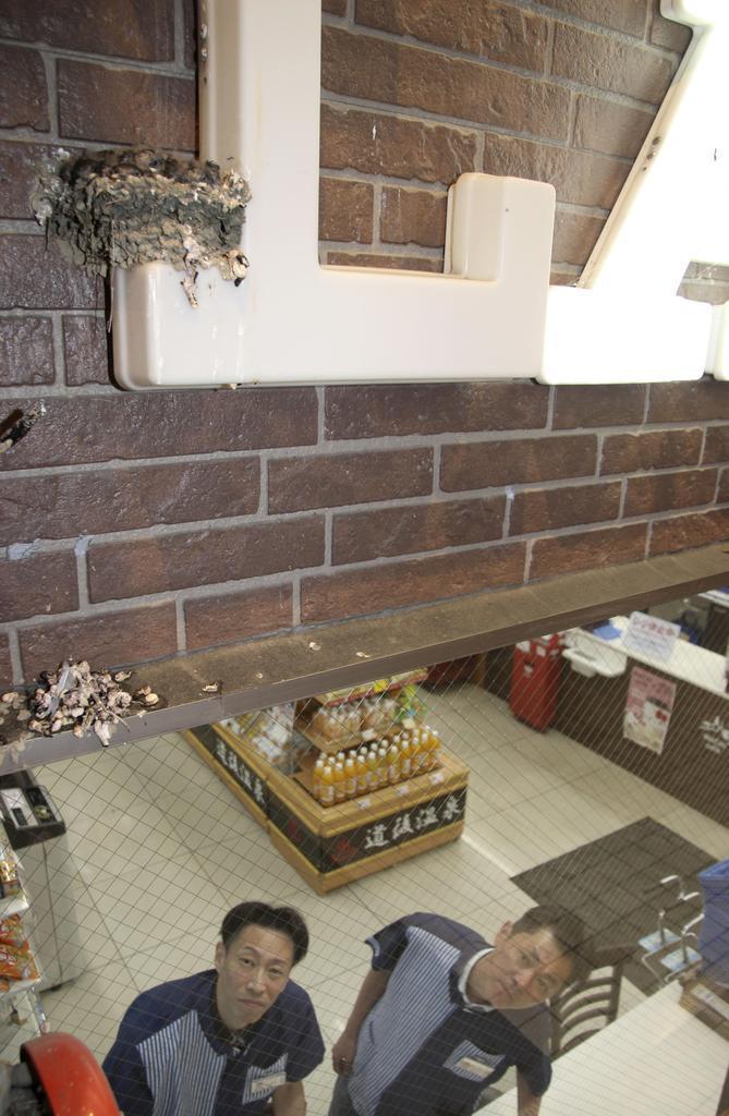 店の看板に作られたツバメの巣を見守る「ローソン道後ハイカラ通店」のオーナー、吉本周作さん(右)=松山市