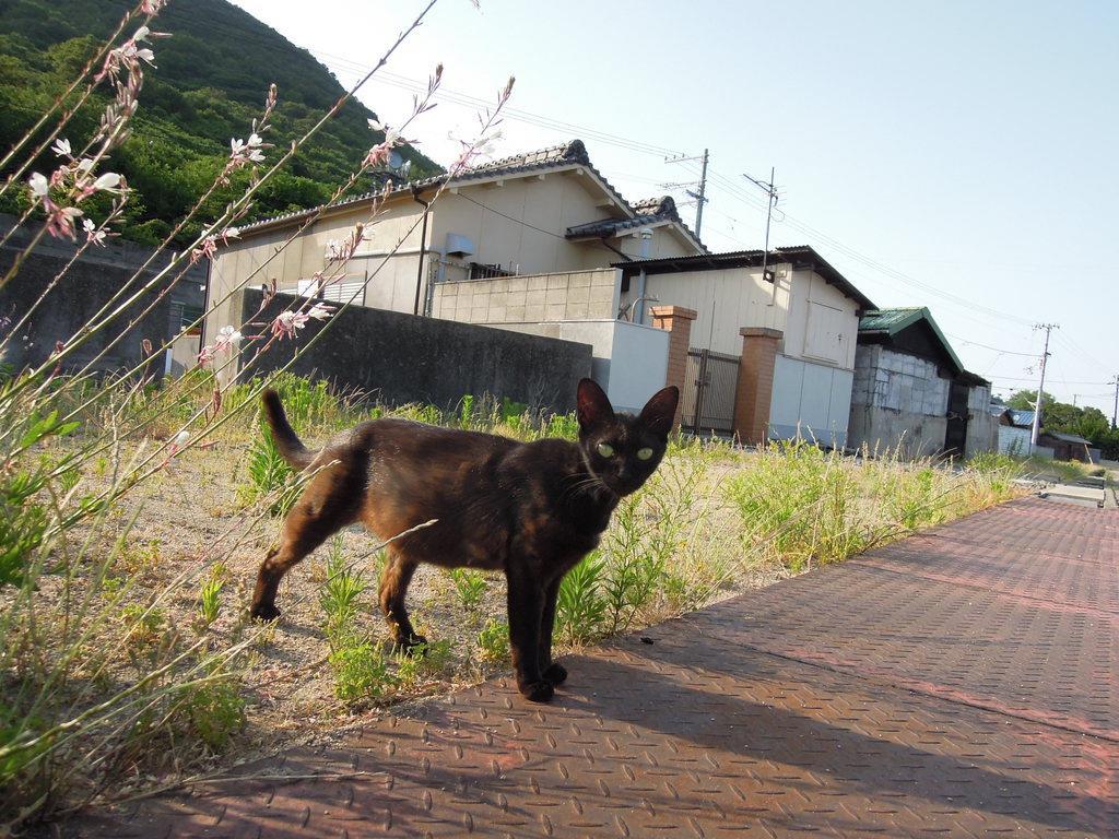 立ち止まりこちらを見るネコ=6月5日午後、香川県多度津町の佐柳島