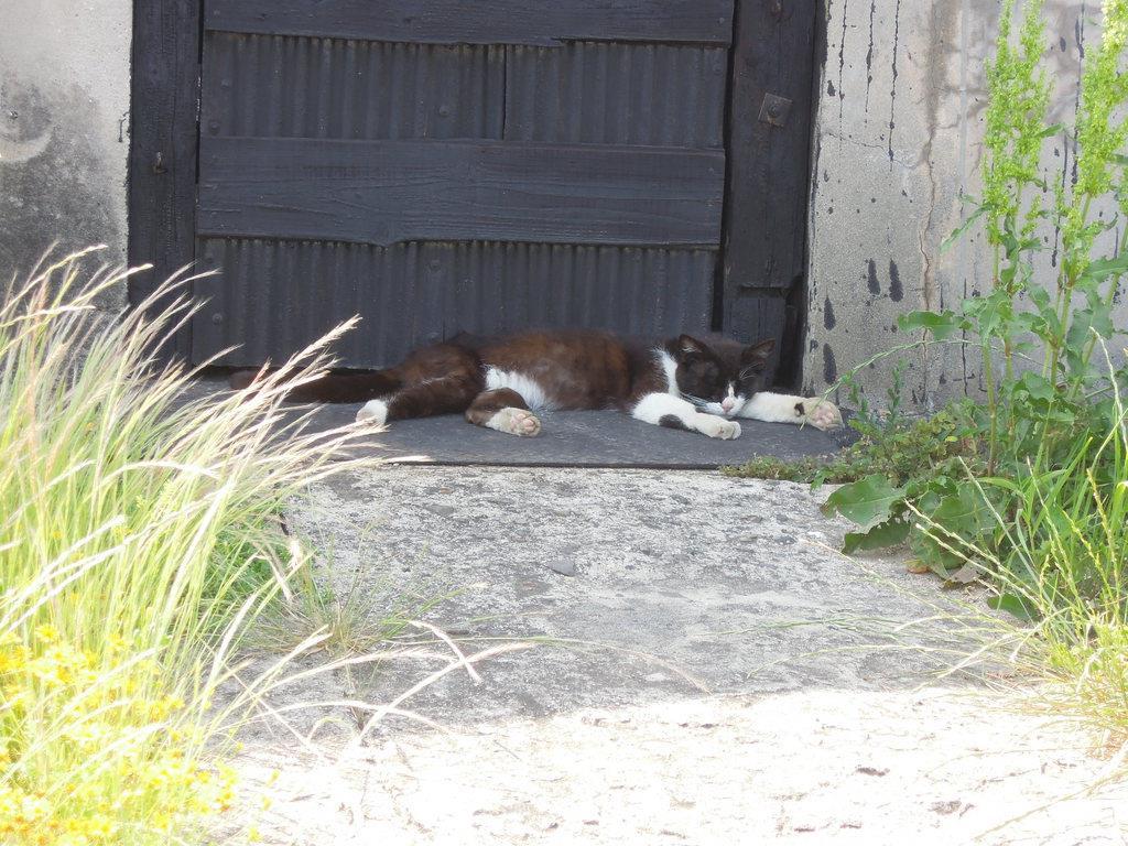 日陰で眠るネコ=6月5日午後、香川県多度津町の佐柳島