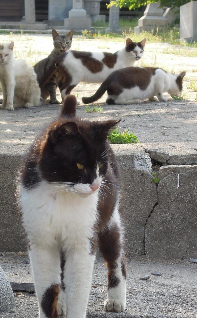 神社で群れるネコ=6月5日午後、香川県多度津町の佐柳島