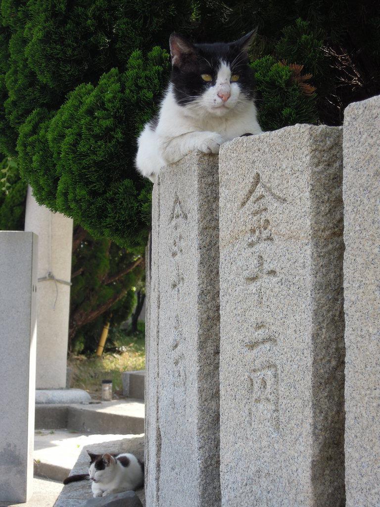 神社に集まったネコ=6月5日午後、香川県多度津町の佐柳島