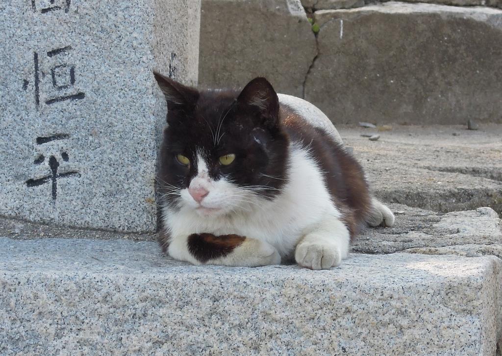 神社でうずくまるネコ=6月5日、香川県多度津町の佐柳島