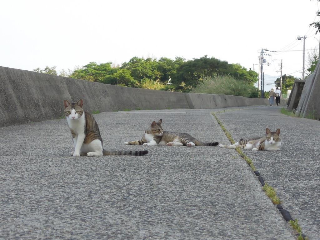 道に寝そべるネコ=6月5日午後、香川県多度津町の佐柳島