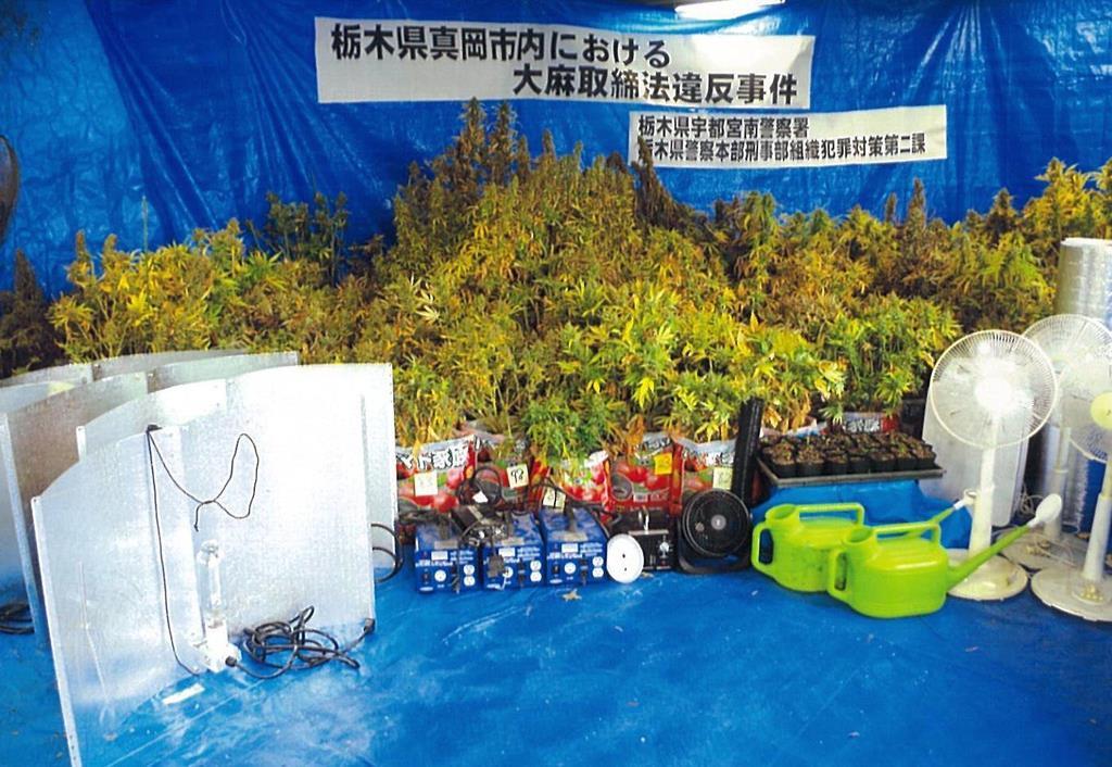 栃木県真岡市のビルから押収された大麻草(県警提供)