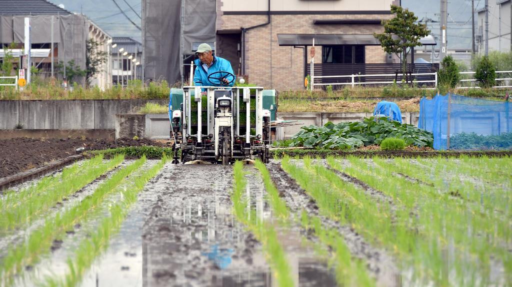 豪雨で水没した田んぼで、田植えをする井上勢治さん=10日午後、岡山県倉敷市真備町(沢野貴信撮影)