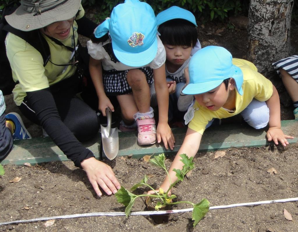 矢賀うりの苗を植える園児ら=広島市東区