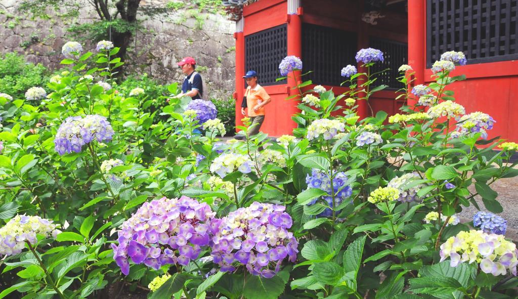 アジサイが咲く境内を散策する人たち=11日午後、桜川市の雨引山楽法寺(篠崎理撮影)