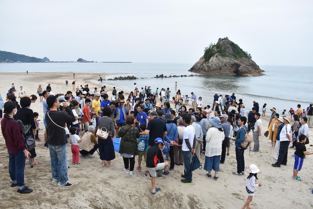 アオウミガメの放流には大勢の町民らが駆け付けた=6月1日、鳥取県岩美町