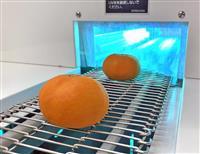 ミカンの腐敗、紫外線で抑制 雑賀技術研究所など装置開発 和歌山