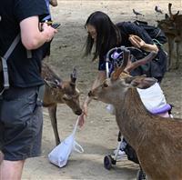奈良のシカ、ポリ袋誤食どう防ぐか 注意書き設置も効果薄く