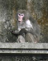 脱走サル14匹全て捕獲 沖縄の動物園