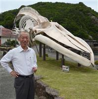 商業捕鯨に期待 開館50年の和歌山「くじらの博物館」