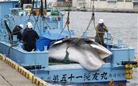 捕鯨論争テーマのドキュメンタリー、6日に東京・世田谷で上映会開催