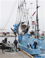 【モンテーニュとの対話 「随想録」を読みながら】(54) 反捕鯨というファシズム