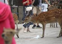 レジ袋誤食でシカ衰弱死 奈良、観光客のマナー低下