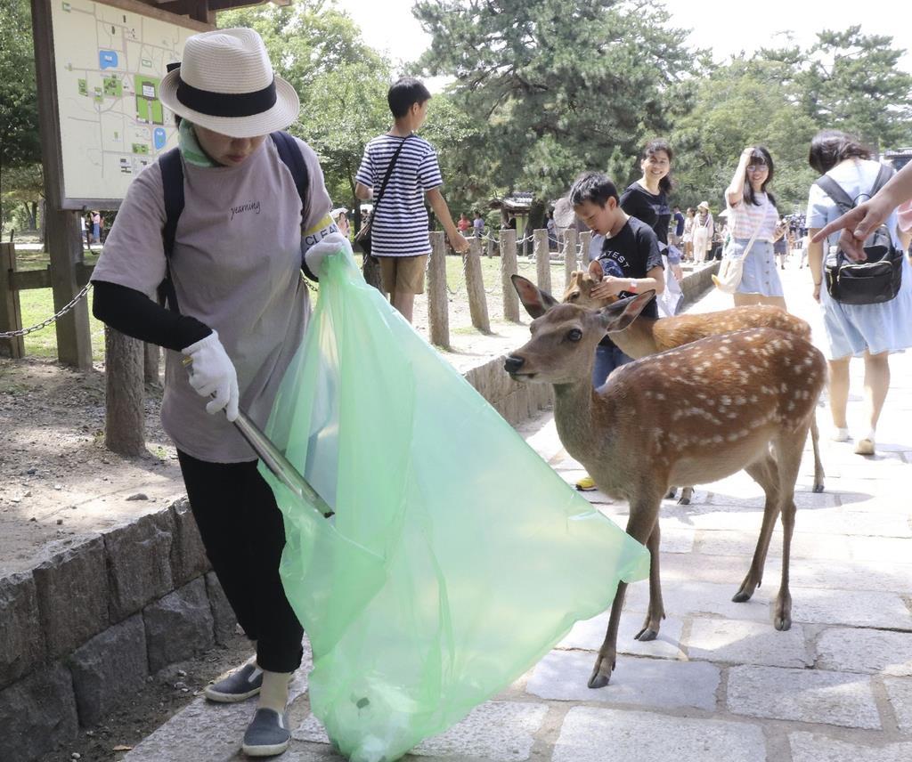 シカの誤食を防ぐ清掃イベントでごみを拾う参加者=奈良市の奈良公園