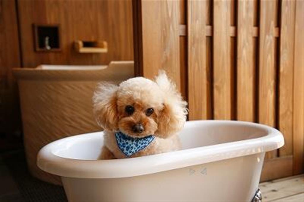 ホテルニューアワジが岡山県で運営するグループホテルの客室。ペット用のバスタブが設置され、愛犬と宿泊できる(ホテルニューアワジ提供)