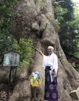ムーミン宿る木? 福岡、五所八幡宮の巨大クスノキ