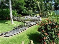 【告知】パプアニューギニア・ラバウルの戦跡をめぐるツアー、10月に開催