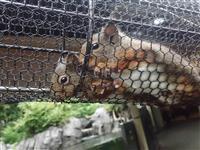 ニホンリスに赤ちゃん3匹 仙台うみの杜水族館
