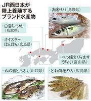 【ビジネスの裏側】寄生虫なし、生食できるお嬢サバ JR西日本が養殖