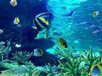 【食育専門家・浜田峰子の魚で元気な未来!】(30)水族館で海の大切さを実感