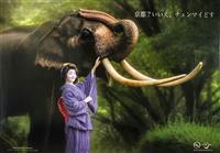京都の人気芸妓が象とツーショット、タイ観光PR