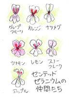 【多田欣也のガーデニングレッスン】(42)かわいい花で香りいっぱい