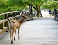 奈良で早朝のシカを撮影する「鹿活」ブーム