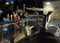ひと味違う「夜の旭山動物園」 夜行性、活発な姿を観察「面白い」