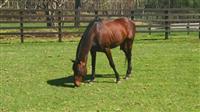 キングカメハメハ死す 04年ダービー馬、18歳牡馬