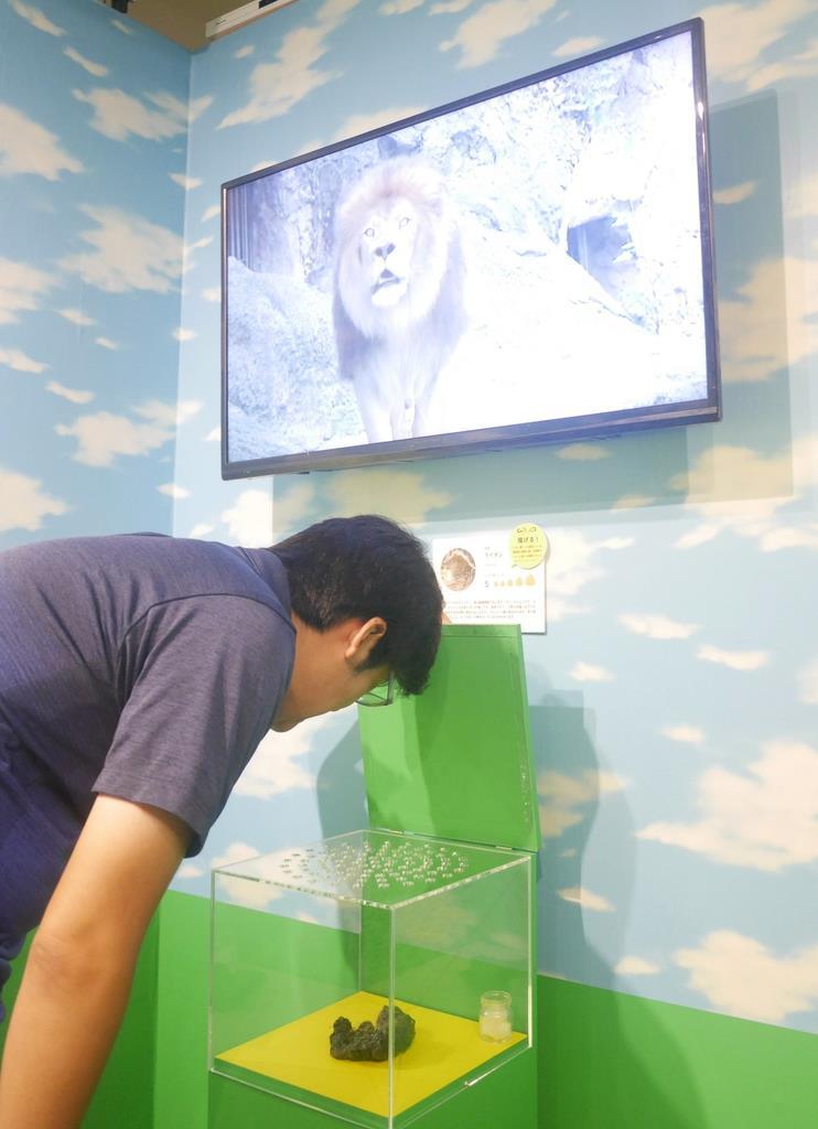 「うんこ展」でにおいメーターMAXなのは、ライオンのうんこ。ふたを閉じてもしばらくにおいが残った