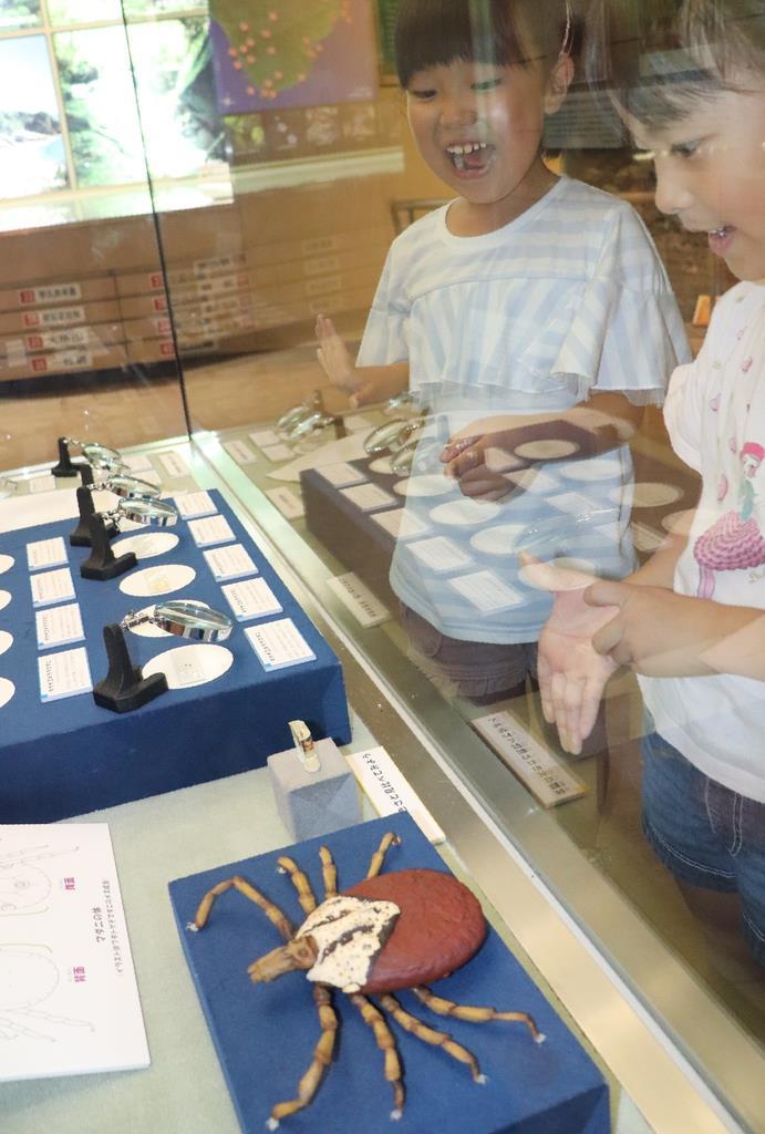 マダニの模型などの展示に興味津々の子供たち=和歌山県海南市の県立自然博物館