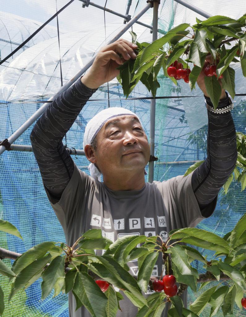 政府が農産物の輸出に積極的に取り組んでいると評価する、果樹農家の小座間剛さん=7月2日、山形県天童市