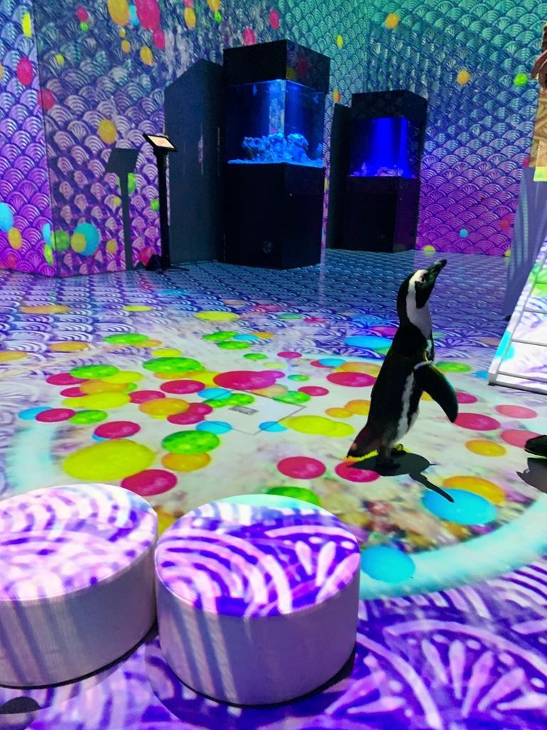 縁日をテーマに、ペンギンの動きに合わせて映像が連動する=東京都品川区のマクセルアクアパーク品川(鈴木美帆撮影)