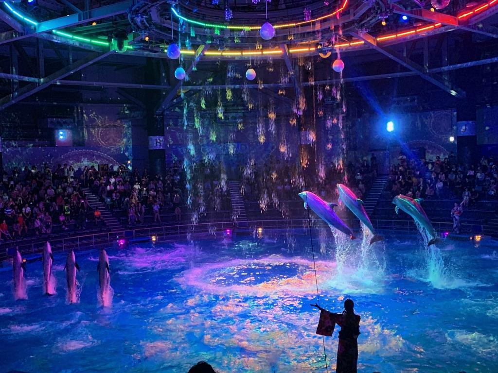 水、光、映像、音の最先端技術とイルカたちの技が融合するドルフィンパフォーマンス(鈴木美帆撮影)