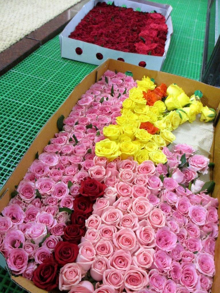 ぎっしりと箱に摘められたバラの花。この日のために約300輪が用意された