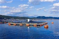 養殖支援ベンチャーのウミトロン 世界初 洋上養殖魚の食欲を自動判定