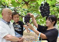 「フルーツ王国」和歌山・かつらぎ町 収穫の季節到来!
