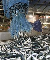 サンマ計500トン水揚げ 北海道、不漁は続く