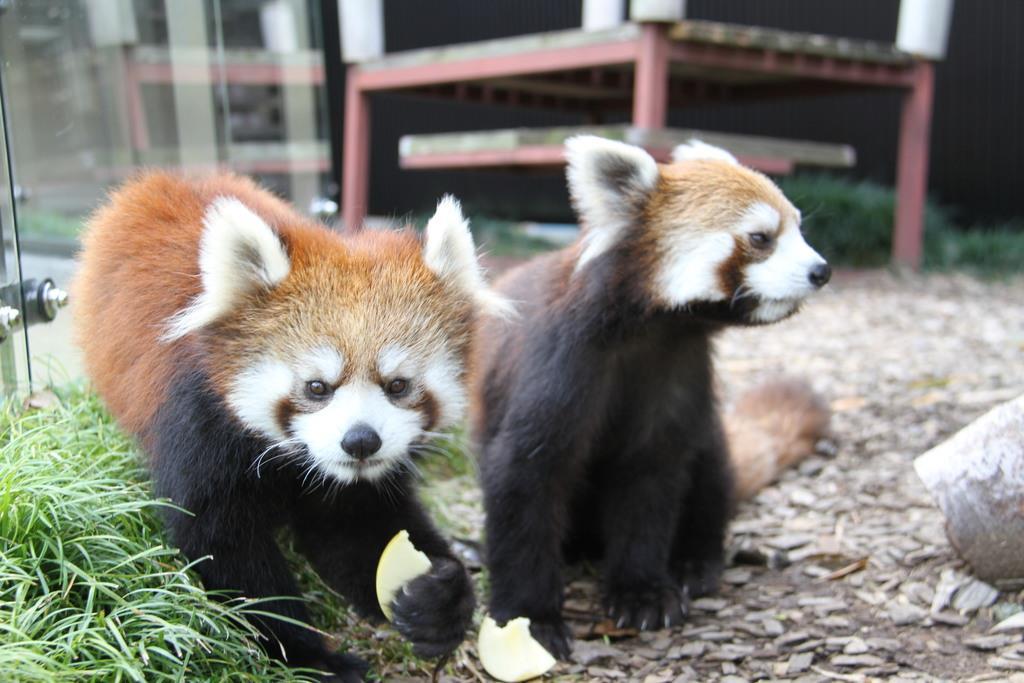 【日本再発見】〝レッサーパンダの聖地〟で注目~静岡市立日本平…