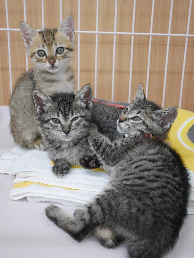 保護され、新しい飼い主が見つかるのを待つ子猫たち=8月、大阪市住之江区のおおさかワンニャンセンター