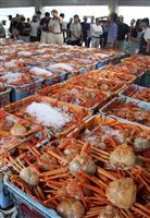 ベニガニ1匹10万円 香住漁港で初競り、過去最高額