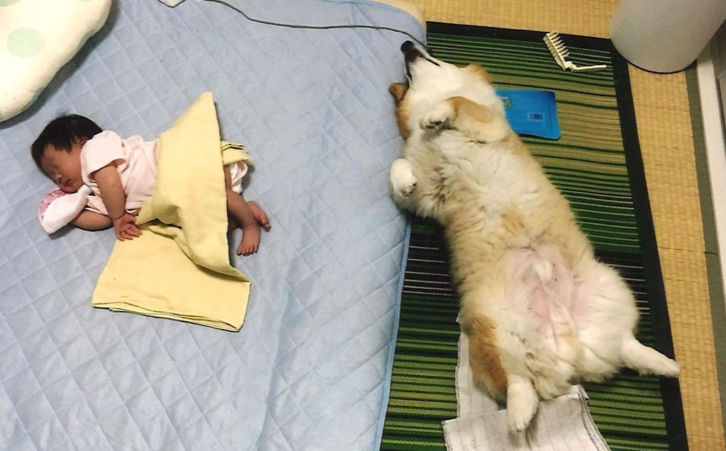 「一緒にお昼寝」 コロさん(4歳) 大阪府寝屋川市 今林洋子さん
