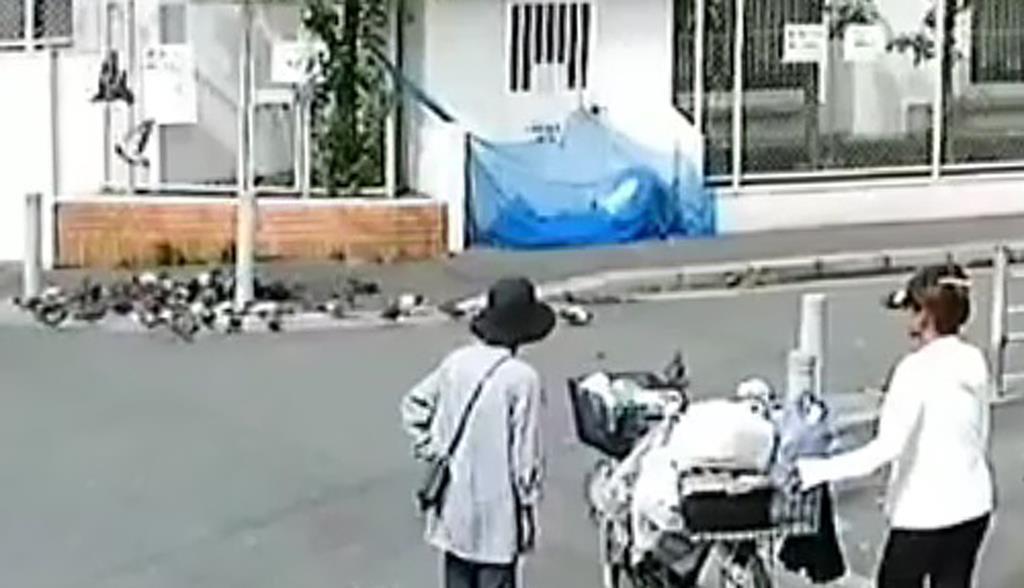 住民が自宅に設置した防犯カメラの映像。まかれた餌にハトが群がっている