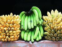 いま、バナナが絶滅の危機にひんしている